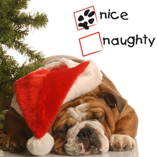 bulldog under a tree