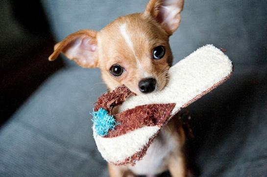 Use puppies: Emotional Marketing